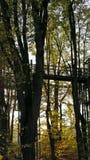 Treeroad стоковые изображения rf