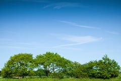 TreeRow Stock Images