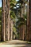 Trees. Botanic Garden royalty free stock photography