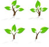Trees. Stock Photo