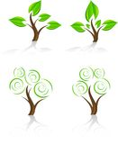 Trees. Royalty Free Stock Image
