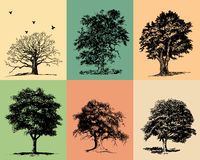 Trees. Llustrations of trees silhouetted on color backgrounds. Additional format Illustrator 8 eps royalty free illustration