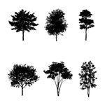 Trees. On black background Royalty Free Stock Photography