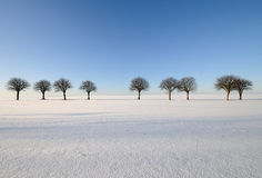 Trees. Lone trees in a field Stock Photos