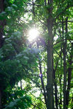 trees Royaltyfria Foton