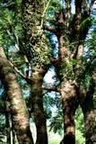 trees Fotografering för Bildbyråer