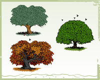Trees. Vector illustration of trees isolated on white backgound. Additional file format Illustrator 8 eps Royalty Free Stock Images