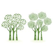 Trees. Two groups of trees with differnet leaves and decorative trunk Stock Photography