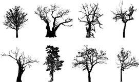 trees Arkivbilder