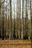 Trees. Forest Stock Photo
