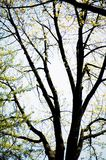 Trees. Forest Royalty Free Stock Photography