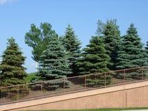 Trees. Along the way Stock Photo