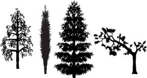 Trees. Birch,cypress,fir and pine trees in silhouette Stock Photography
