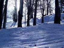 trees royaltyfri bild