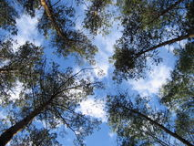 Trees. TREE, ARBOR, GREEN, VERDANCY, GREENERY, VERDURE, SKY, CLOUDS, VIEW, WOODS, FOREST royalty free stock photography