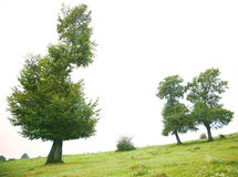 Trees Royalty Free Stock Photos