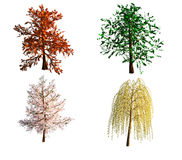 Trees. 4 different trees isolated on white background stock illustration