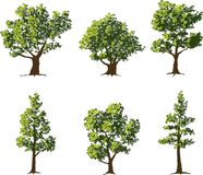 Trees. Collection of six fully grown shade trees Stock Images
