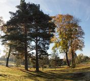 The trees. Village gold leafs - autumn coming Royalty Free Stock Images