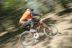 Through the trees. Mountain biker racer dodging trees Stock Image