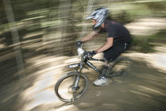 Through the trees. Mountain bike racer Stock Photography