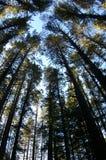 Trees. Taken with a fish-eye lense Stock Photo