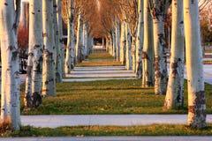 trees Arkivbild