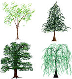 Trees. Selection of tree illustration isolated on a white background Stock Photo