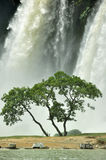 Trees. Growth in the waterfall under the tree Stock Photography