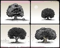 Trees. Four different oak trees isolated on light background Royalty Free Stock Images