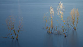 Trees. A shot of the dried trees in a lake Royalty Free Stock Photo
