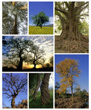 Trees. Collage of various kind of trees from Mexico royalty free stock images