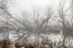 Trees. View of few leafless trees on a foggy morning royalty free stock images