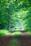 Trees. Not asphalted road passing through growing trees (spring season Stock Image