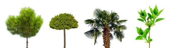 trees Arkivfoto