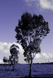 Trees. Toned blue Royalty Free Stock Photography