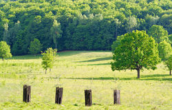 Trees. Tree in spring meadow - sunset Stock Photos