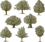 Trees. Vector image of a different trees Royalty Free Stock Photos