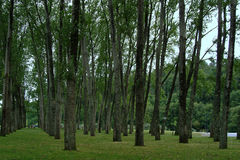 Trees. Forest composition Stock Photo