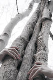 Trees. Hands covered tree transmit all the power of unity with nature Stock Photos