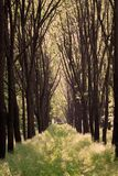 Trees. An old forest with many trees Royalty Free Stock Photos