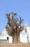 Trees. Royaltyfria Foton
