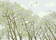 Trees. Intertwined branches of bare trees against cloudy sky in springtime. Vector illustration Royalty Free Stock Image