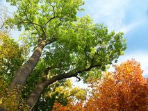 Trees. Beautiful Vivid Colour Trees. Autumn Stock Photo