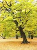 Trees. Autumn Trees Stock Photos