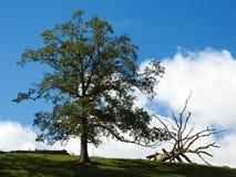 trees Royaltyfri Fotografi