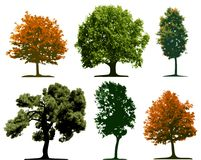 Trees. Isolated on white background Royalty Free Stock Images