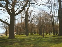 Trees. Wonderful trees in the very beautiful city of Peterhof Stock Photography