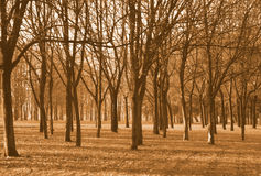 Trees. Filtered photo Stock Photo