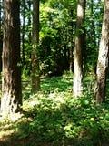 4 trees Arkivbild